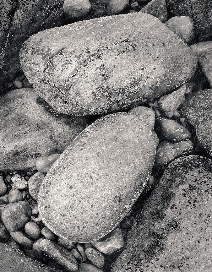 Boulders, Limpets, Acadia Nat'l. Park, Maine, USA
