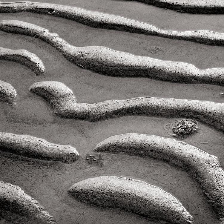 Sand Snakes, Spurn Nature Reserve, England, UK