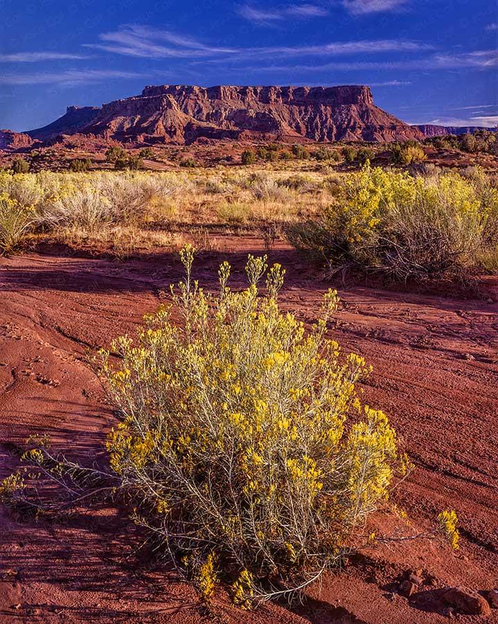 Desert Spring, Utah, USA